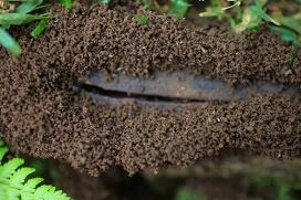 Ant's art