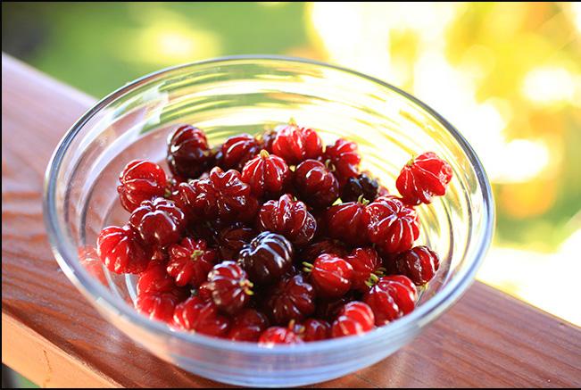 Suiriname cherries