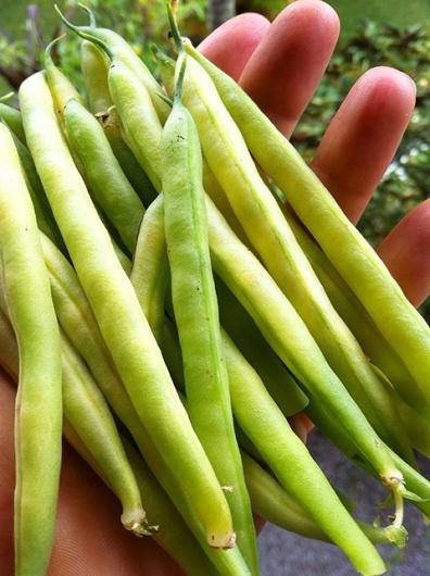 Golden beans