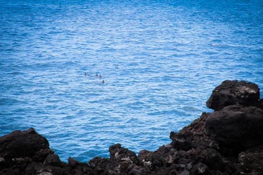 a hike to Kehena - Dolphins accompanied us