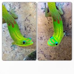 Madagascar geckos