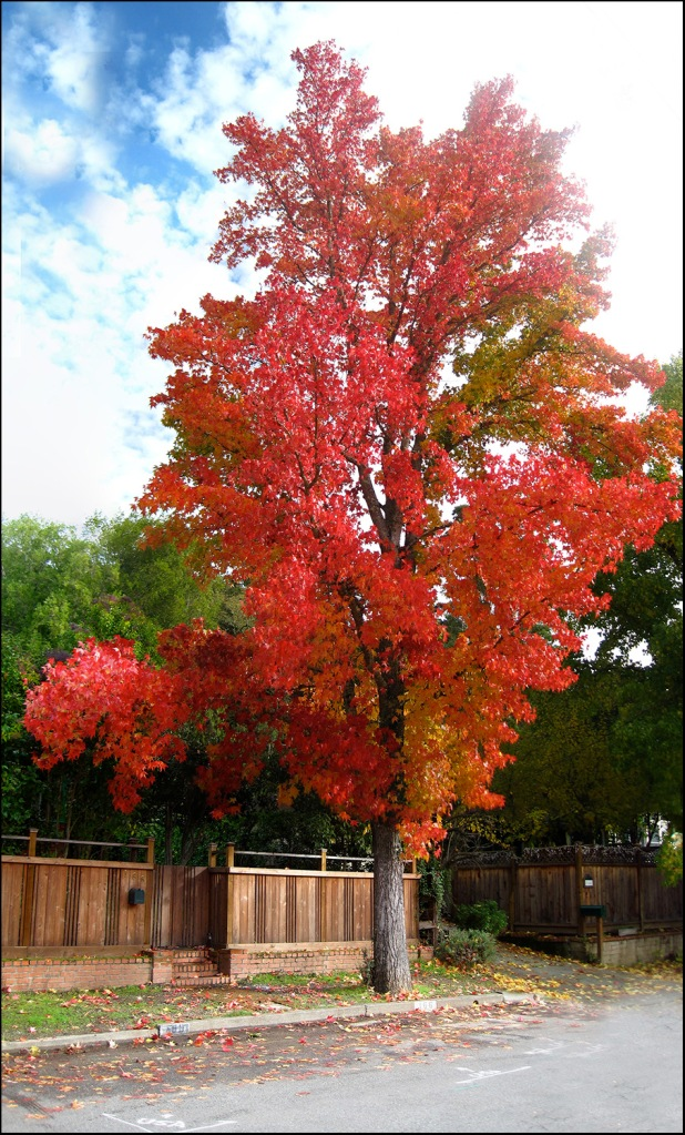 Red tree 2